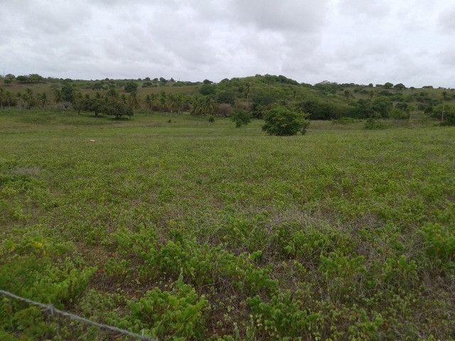 Fazenda em monte alegre, 30 há. duas casas, poço, curral, rio, galpão - Foto 13