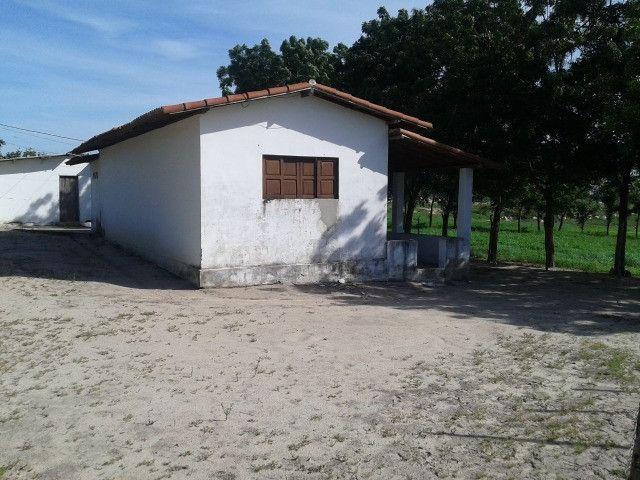 Em ceara mirim fazenda com 36 há,casa,curral,poço,pasto,pocilga,barreiro - Foto 4