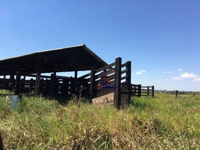 Fazenda na beira da BR 364 próximo à Cacoal - Foto 13