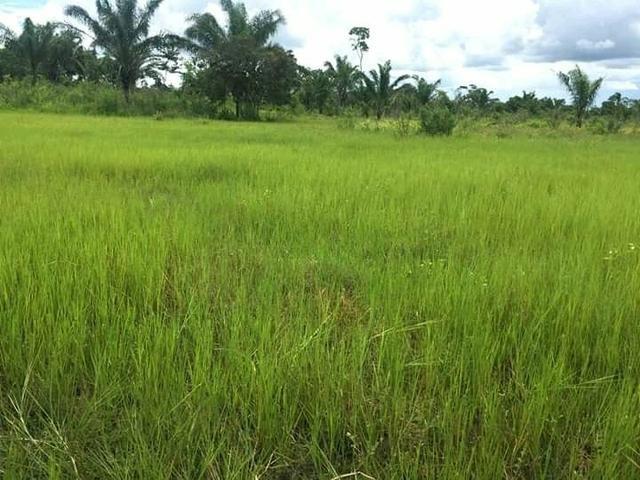Fazenda em Governador Nunes Freire - Foto 4