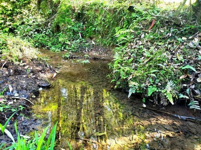 Belo Sítio com 30 hectares as Margens do Rio Canoas, em Rio Rufino - Foto 9