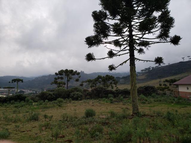 Sítio 14 hectares em Urupema com Cachoeira - Foto 6