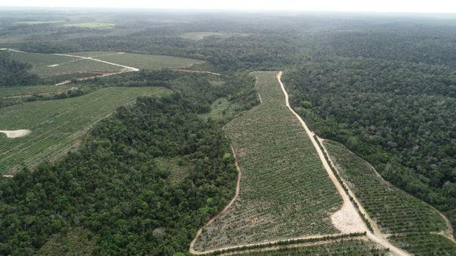 Terra à venda pra Reserva Legal