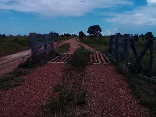 Fazenda de 840 alqs. dupla aptidão Proxima de Dois Irmãos - Foto 10