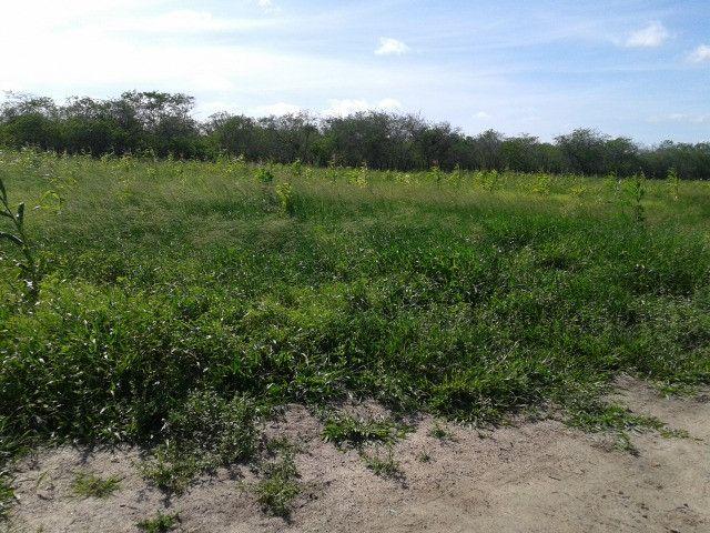 Em ceara mirim fazenda com 36 há,casa,curral,poço,pasto,pocilga,barreiro - Foto 11