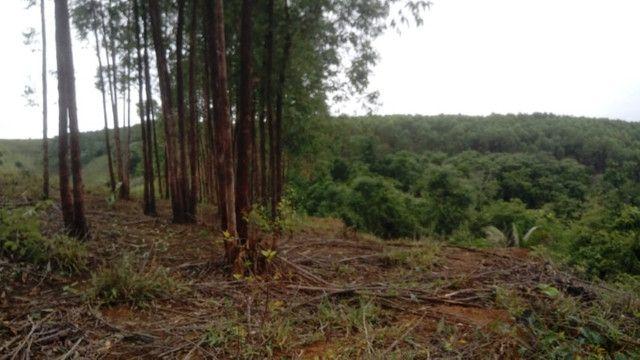 Vendo eucalipto para secador e carvão - Foto 5