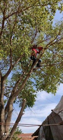 Podar e corte de árvores