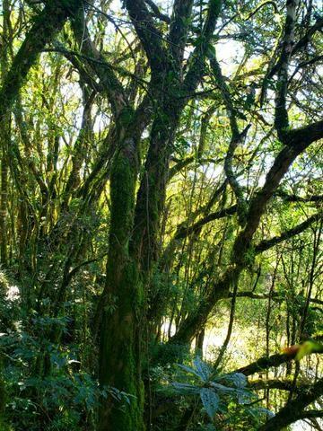 Belo Sítio com 30 hectares as Margens do Rio Canoas, em Rio Rufino - Foto 8