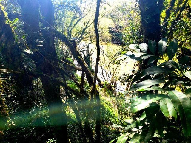 Belo Sítio com 30 hectares as Margens do Rio Canoas, em Rio Rufino - Foto 11