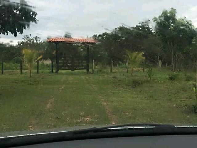Fazenda em Governador Nunes Freire - Foto 3
