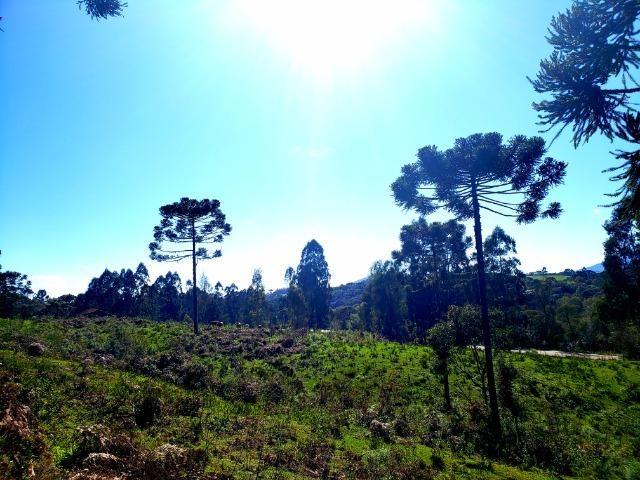 Belo Sítio com 30 hectares as Margens do Rio Canoas, em Rio Rufino - Foto 6