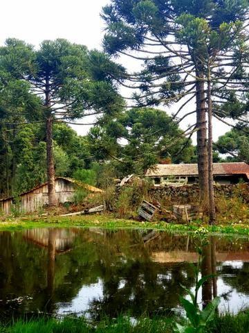 Sítio 14 hectares em Urupema com Cachoeira - Foto 11