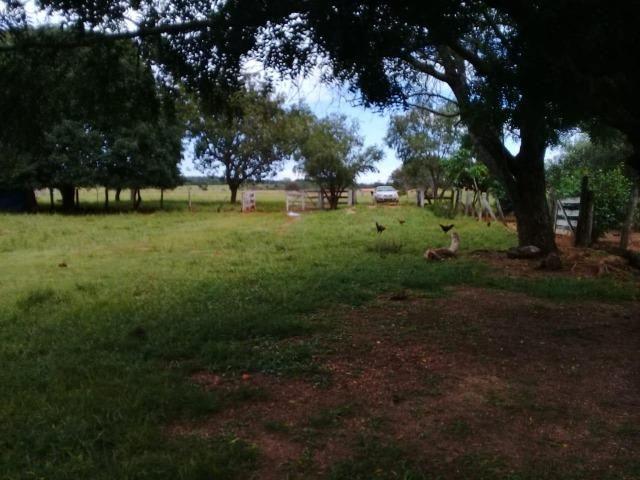 Fazenda de 840 alqs. dupla aptidão Proxima de Dois Irmãos - Foto 13