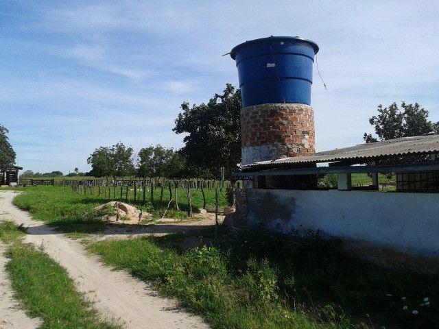 Em ceara mirim fazenda com 36 há,casa,curral,poço,pasto,pocilga,barreiro - Foto 7