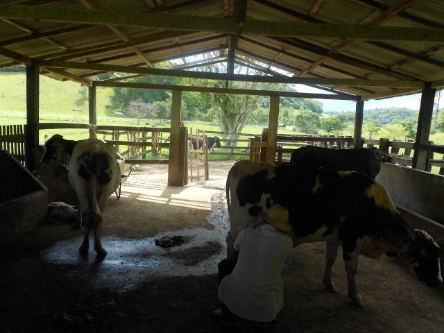 Jordão corretores - Fazenda 22 alqueires Cachoeiras de Macacu porteira fechada - Foto 7