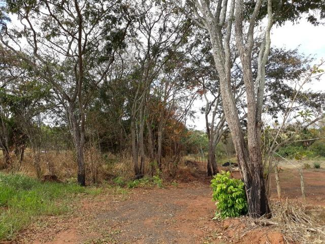 Vendo sitio 2 hectares (20.000 m2) - Foto 2