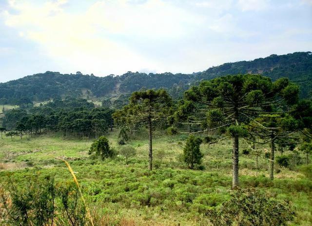 Sítio 14 hectares em Urupema com Cachoeira - Foto 4