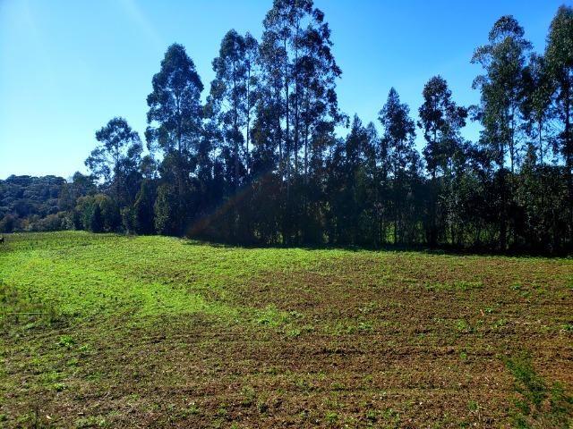 Belo Sítio com 30 hectares as Margens do Rio Canoas, em Rio Rufino - Foto 12