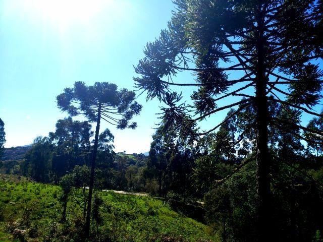 Belo Sítio com 30 hectares as Margens do Rio Canoas, em Rio Rufino - Foto 7