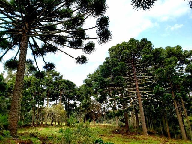 Sítio 14 hectares em Urupema com Cachoeira - Foto 10
