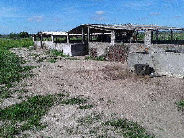 Em ceara mirim fazenda com 36 há,casa,curral,poço,pasto,pocilga,barreiro - Foto 14