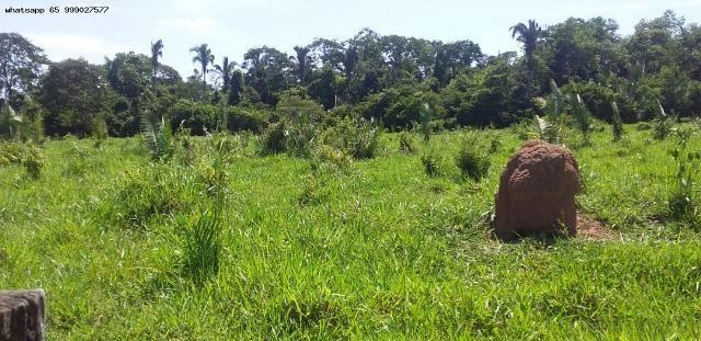 Sítio para Venda em Tangará da Serra, Assentamento Antonio Conselheiro, 3 dormitórios, 1 b - Foto 10