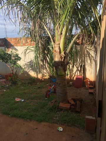 Ágio de casa no setor ponta kaiana. - Foto 11