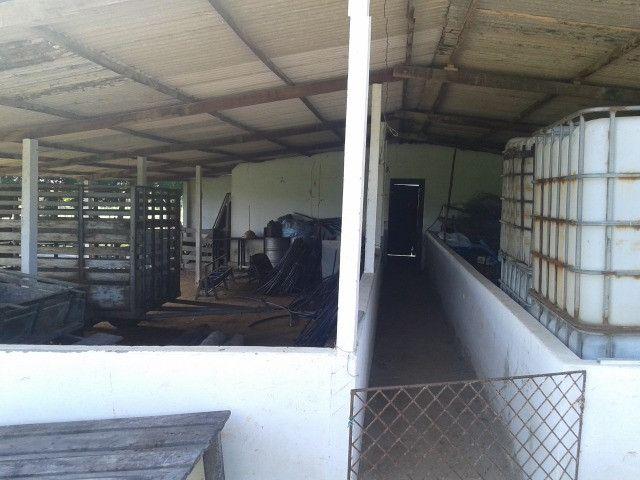 Em ceara mirim fazenda com 36 há,casa,curral,poço,pasto,pocilga,barreiro - Foto 19