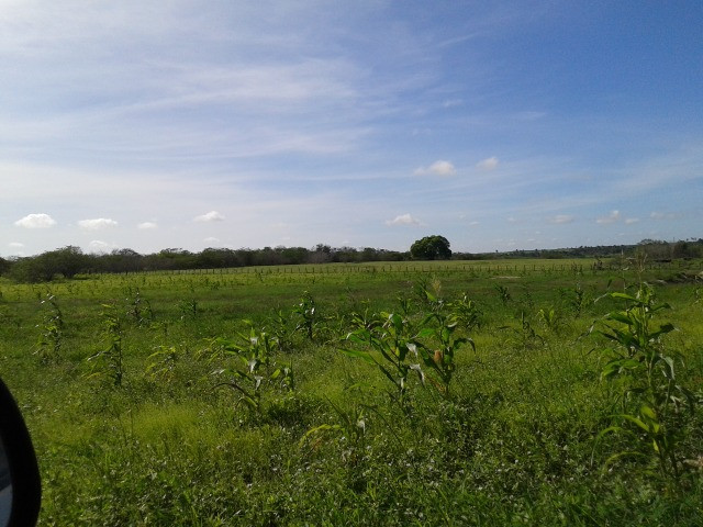 Em ceara mirim fazenda com 36 há,casa,curral,poço,pasto,pocilga,barreiro - Foto 6