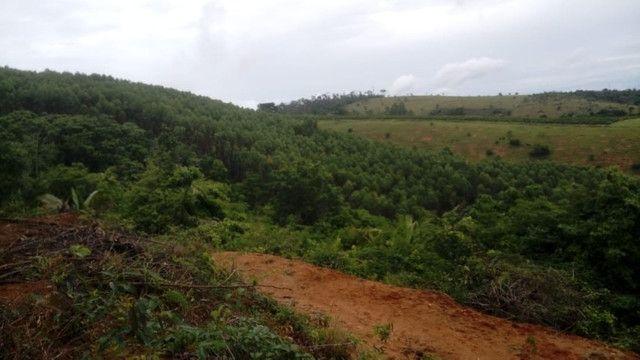 Vendo eucalipto para secador e carvão - Foto 2