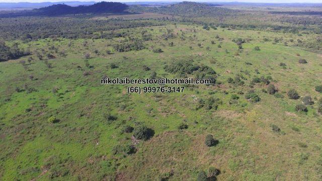 Fazenda 1.170 hectares nordeste mt nikolaiimoveis