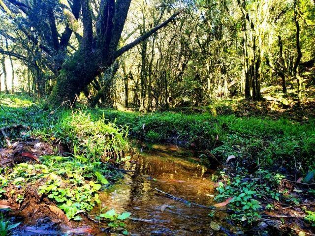 Belo Sítio com 30 hectares as Margens do Rio Canoas, em Rio Rufino - Foto 5