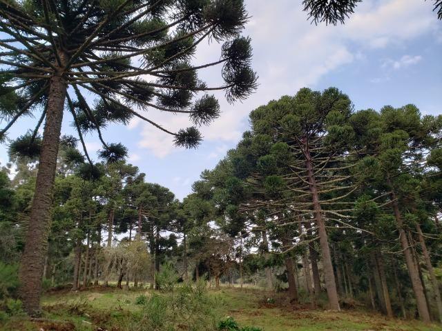 Sítio 14 hectares em Urupema com Cachoeira - Foto 2