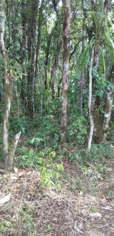 Oportunidade Linda Chacrinha alta semi plana campina grande do sul - Foto 3