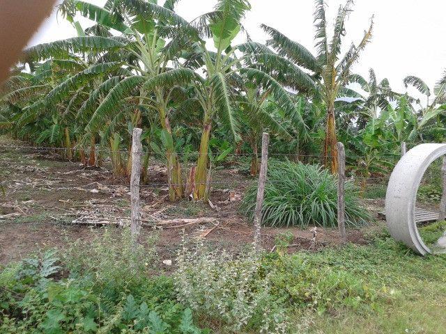 Fazenda em monte alegre, 30 há. duas casas, poço, curral, rio, galpão - Foto 19