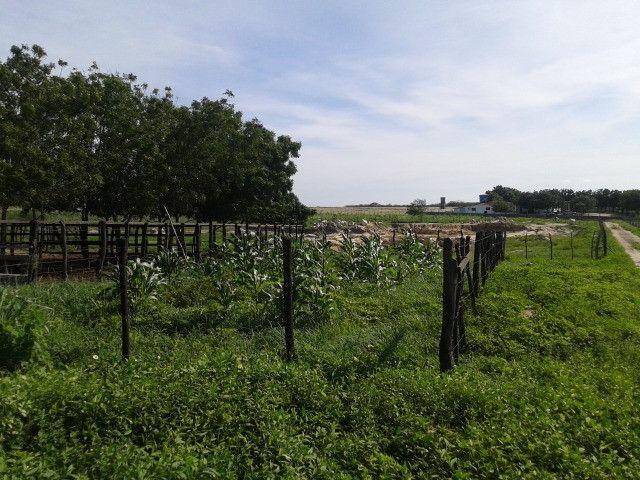 Em ceara mirim fazenda com 36 há,casa,curral,poço,pasto,pocilga,barreiro - Foto 16