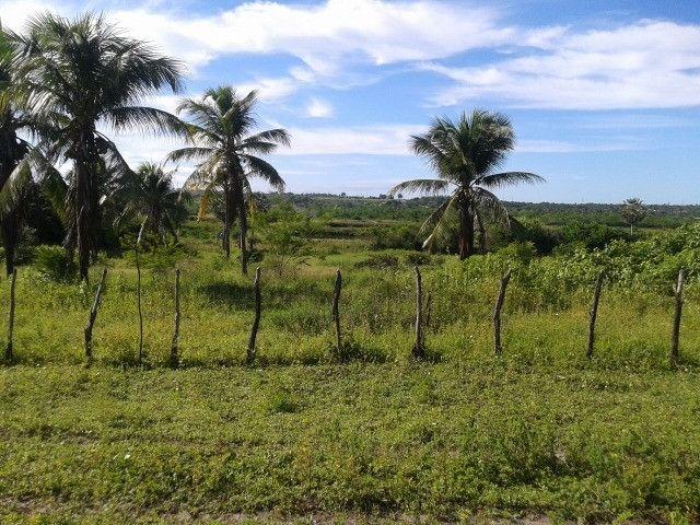 São Paulo do Potengi com 280 há, açude,cas,barreiro,lagoa,poço - Foto 15