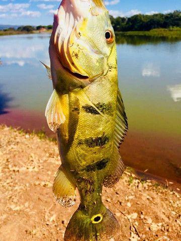 Condomínio de Lazer e Pesca Portal do lago - Foto 3