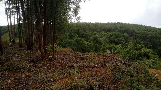 Vendo eucalipto para secador e carvão - Foto 3