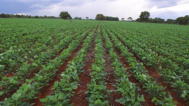 Fazenda dupla aptidão - soja e boi