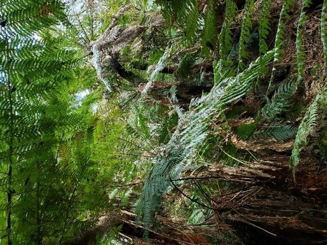Sítio 14 hectares em Urupema com Cachoeira - Foto 18