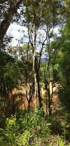 Oportunidade Linda Chacrinha alta semi plana campina grande do sul - Foto 6