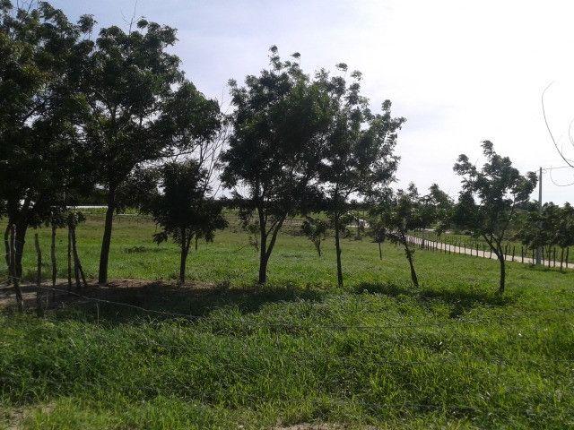 Em ceara mirim fazenda com 36 há,casa,curral,poço,pasto,pocilga,barreiro - Foto 8
