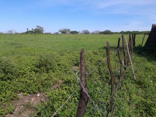 Em ceara mirim fazenda com 36 há,casa,curral,poço,pasto,pocilga,barreiro - Foto 18