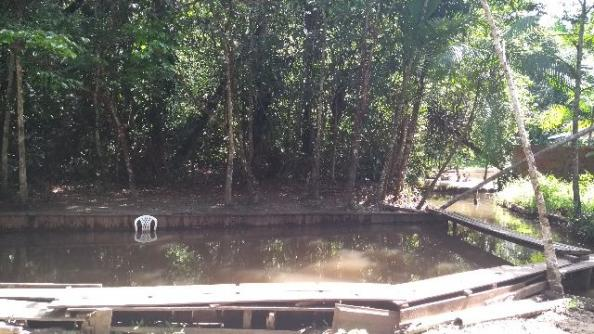 200 mil pra fechar o negocio Linda chácara no papuquara com uma casa com 3/4 ,sala,cozinha - Foto 12
