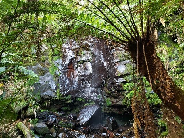 Sítio 14 hectares em Urupema com Cachoeira - Foto 16