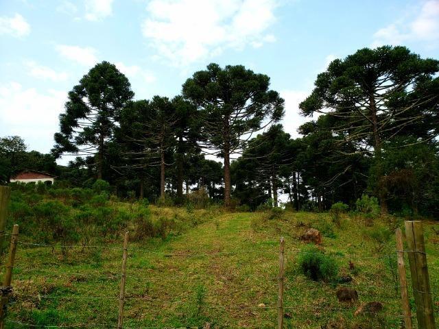 Sítio 14 hectares em Urupema com Cachoeira - Foto 15