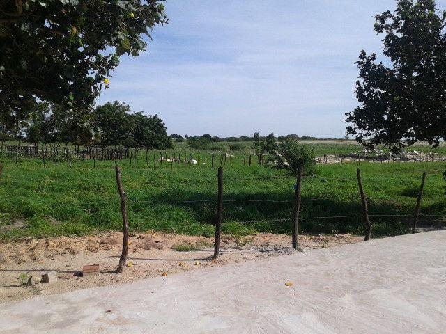 Em ceara mirim fazenda com 36 há,casa,curral,poço,pasto,pocilga,barreiro - Foto 12