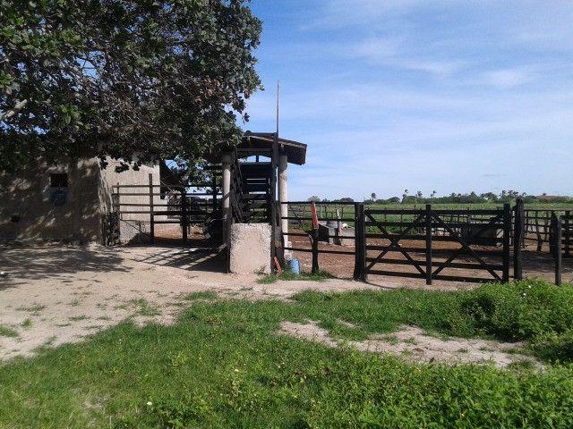 Em ceara mirim fazenda com 36 há,casa,curral,poço,pasto,pocilga,barreiro