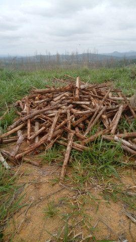 Vendo eucalipto para secador e carvão - Foto 6